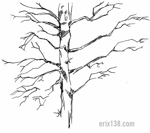 Tree ink drawing branches